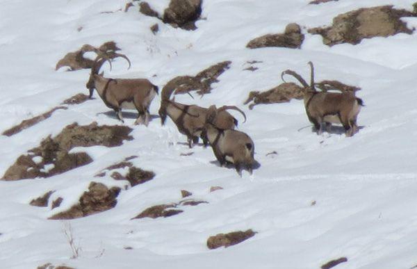 پارک ملی لار پس از بارش نخستین برف پاییزی