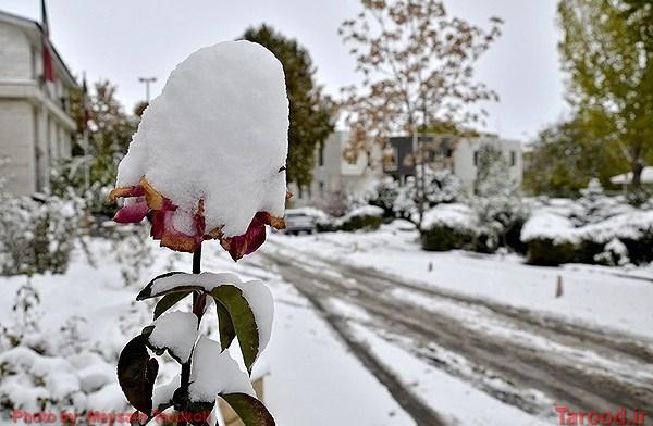 نخستین برف پاییزی در دماوند/تصاویر