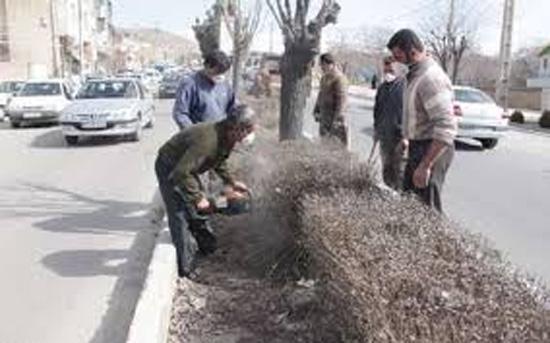 آغاز هرس زمستانه درختان در شهرستان دماوند