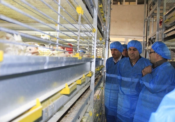 افتتاح پروژه تولید مرغ گوشتی در قفس در دماوند