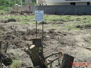 واکنش فرماندار به خبر نابودی یک روزه باغی در دماوند