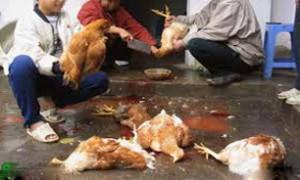 مهار به موقع آنفولانزای مرغی در دماوند