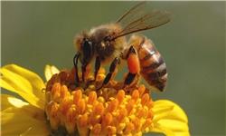 برگزاری دومین همایش ملی زنبورعسل در دماوند