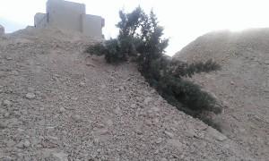 خاک بر سرریزی شبانه بر روی کاجهای بیست ساله در دماوند