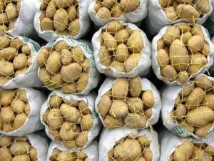 عضو کمیسیون کشاورزی: حجتی امروز برای پاسخ به چرایی امحا سیبزمینیها به مجلس می آید
