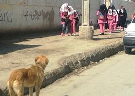 جمعآوری و اتلاف سگهای ولگرد در شهر رودهن