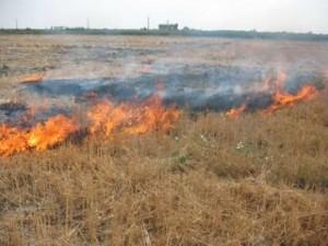 سوختگی ۷۰ درصد یک کشاورز بر اثر آتش زدن علفهای هرز در روستای لومان دماوند