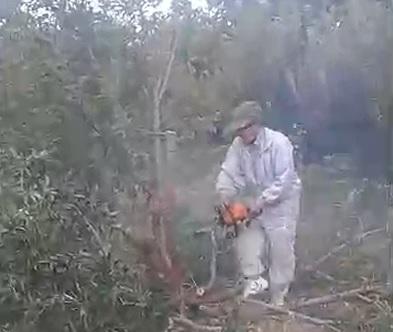 جایگزینی ارقام تجاری گلابی، علت قطع درختان سیب توسط یک باغدار در هومند کیلان است