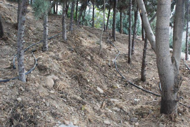 کاشت ۴۰۰ اصله نهال در رودهن/ افزایش سرانه فضای سبز رودهن در دستور کار قرار دارد