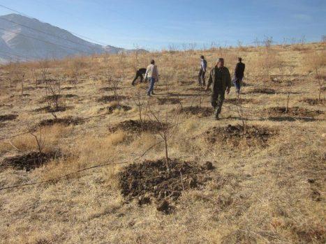 رفع تصرف ۱۱ هکتار از اراضی ملی در منطقه «آرو» دماوند/ این اراضی توسط تعداد۶نفر از اشخاص بومی تصرفشدهبود