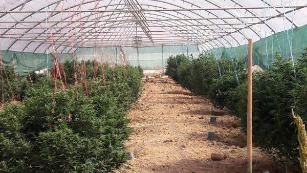 شناسایی ۱۰ گلخانه کشت مواد روانگردان در شهرستان دماوند/ دستورات لازم به جهاد کشاورزی و مبادی نظارتی مرتبط صادر شده است