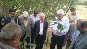 بازدید کارگروه رونق تولید از دامداری پرواری قرایی در روستای اوزندره دماوند (1)