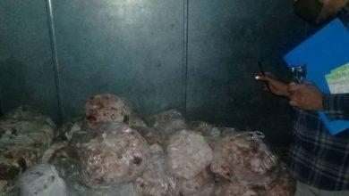 تصویر از معدومسازی حدود ۳۰۰ کیلوگرم گوشت منجمد، آلایشات مرغی و جوجه زعفرانی فاسد در منطقه گیلاوند