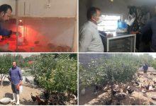 تصویر از نگاهی به مشکلات فعلی برای جوان کارآفرین شهرستان دماوند در صنعت پرورش و تولید مرغ تزئینی و محلی